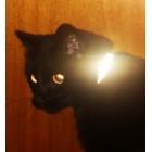 Reflexhalsband till katt