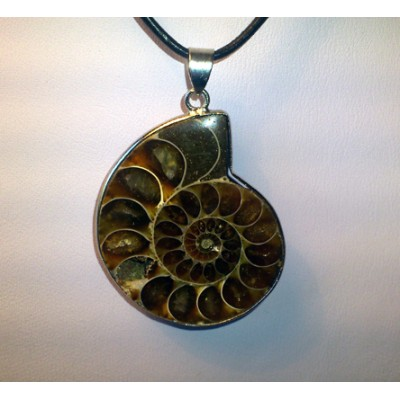 Ammonit 19101